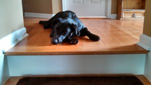 Dog sleeping on hardwood floor